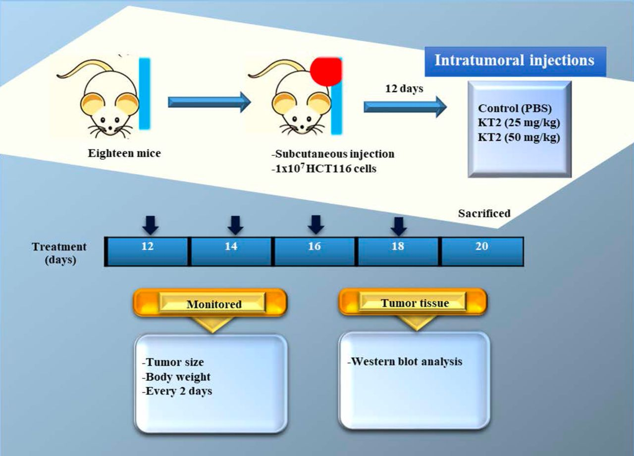 Frontiers   Inhibition of DNA and Histone Methylation by 5